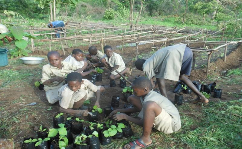 Vue partielle des élèves de l'EPP Dzogbépimé lors du  repiquage  des jeunes plants de teck dans des pots.