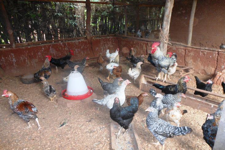 Suivi de l'élevage à AFOWUIME chez la bénéficiaire KPOTOLI Wonon